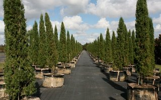 Nursery Photos | Quality Trees and Shrubs | Umatilla, FL