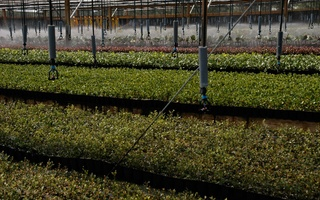 Nursery Photos | Quality Trees and Shrubs | Umatilla, FL