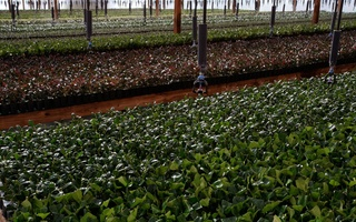 Nursery Photos   Quality Trees and Shrubs   Umatilla, FL